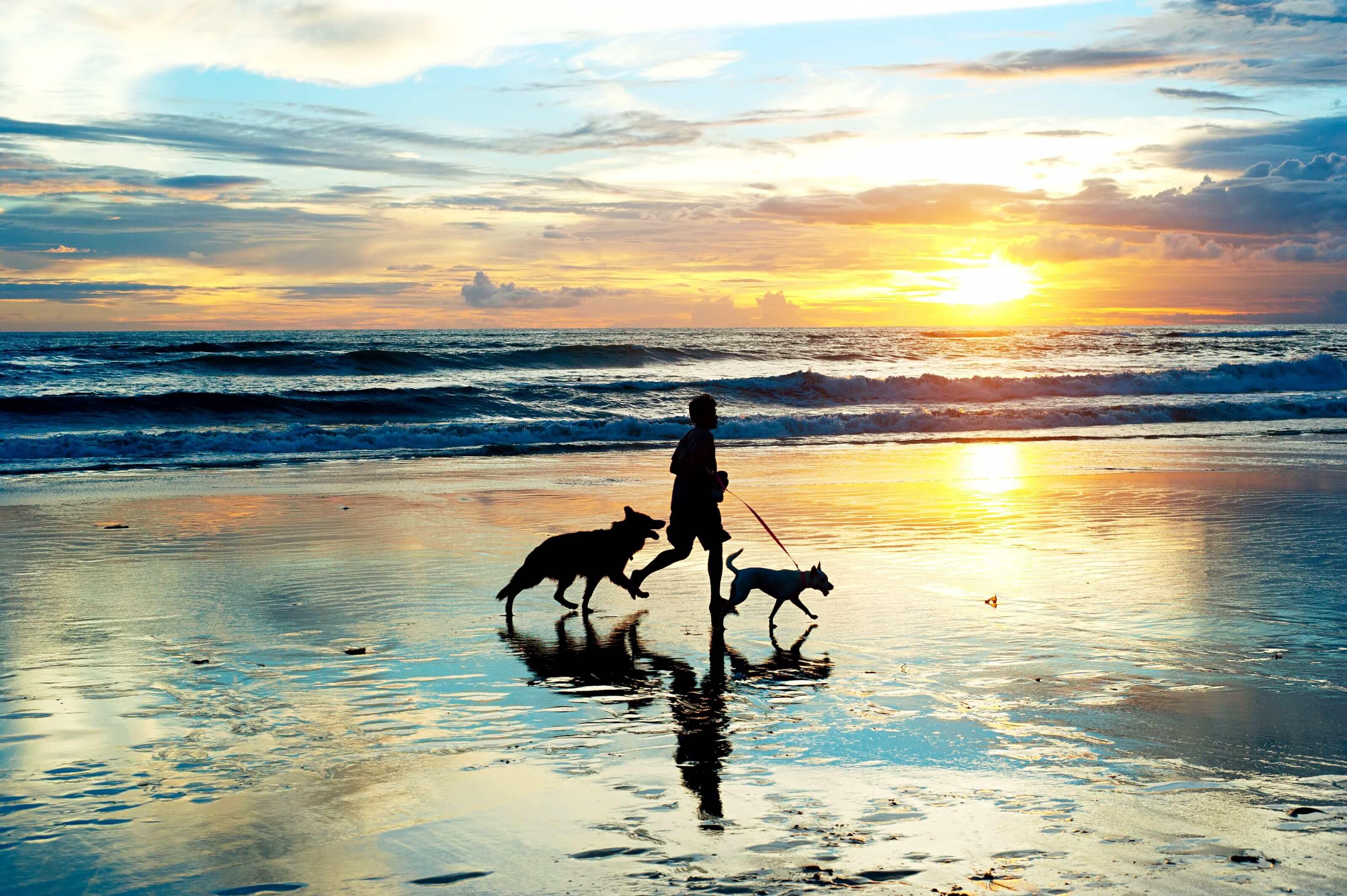 Strandwandeling zonsondergang met honden
