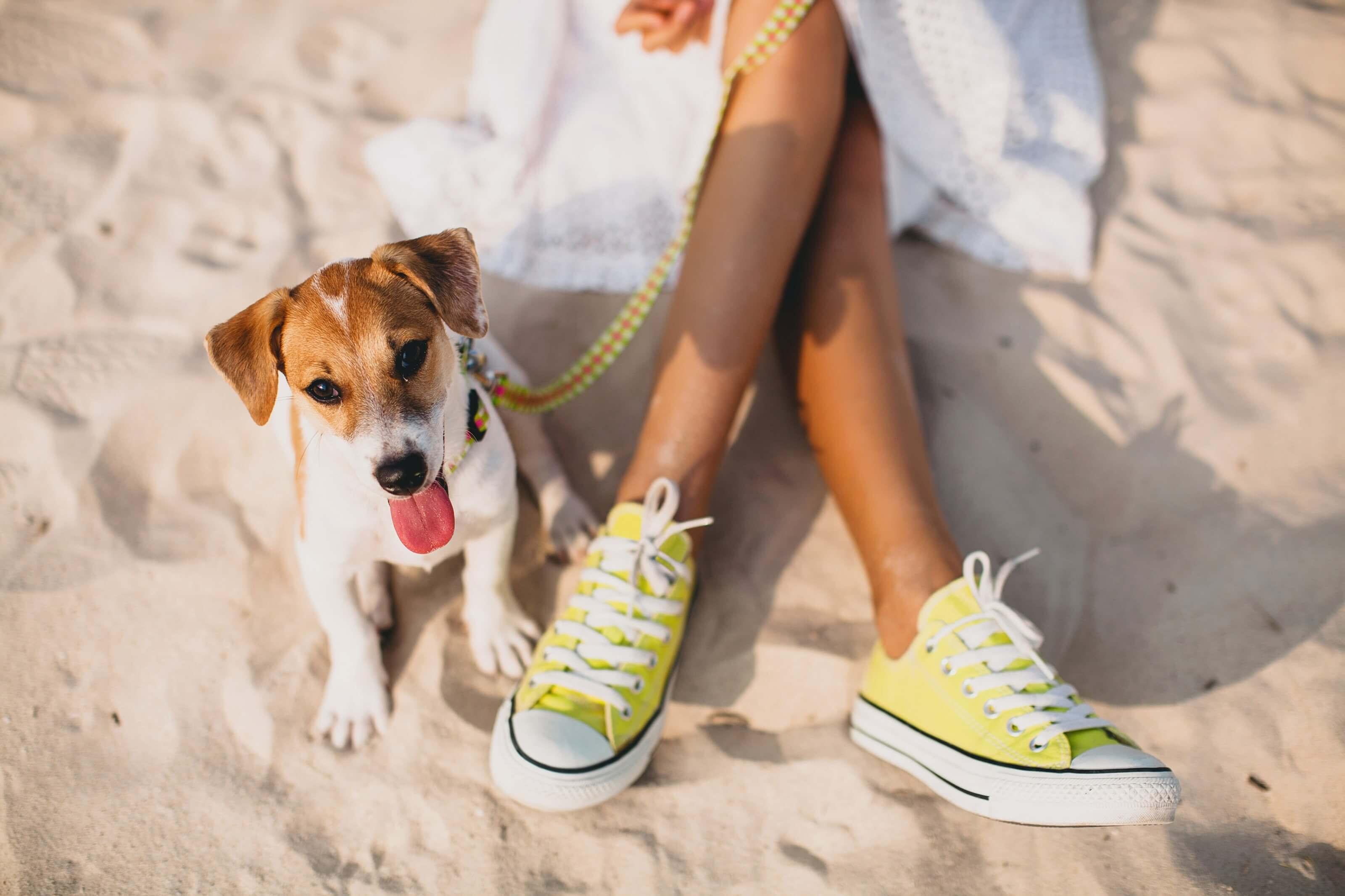 Strandvakantie met de hond