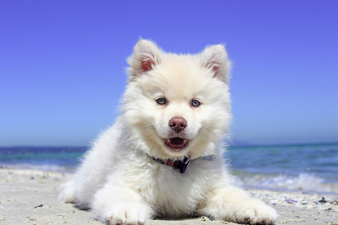 Noordzeepark honden welkom