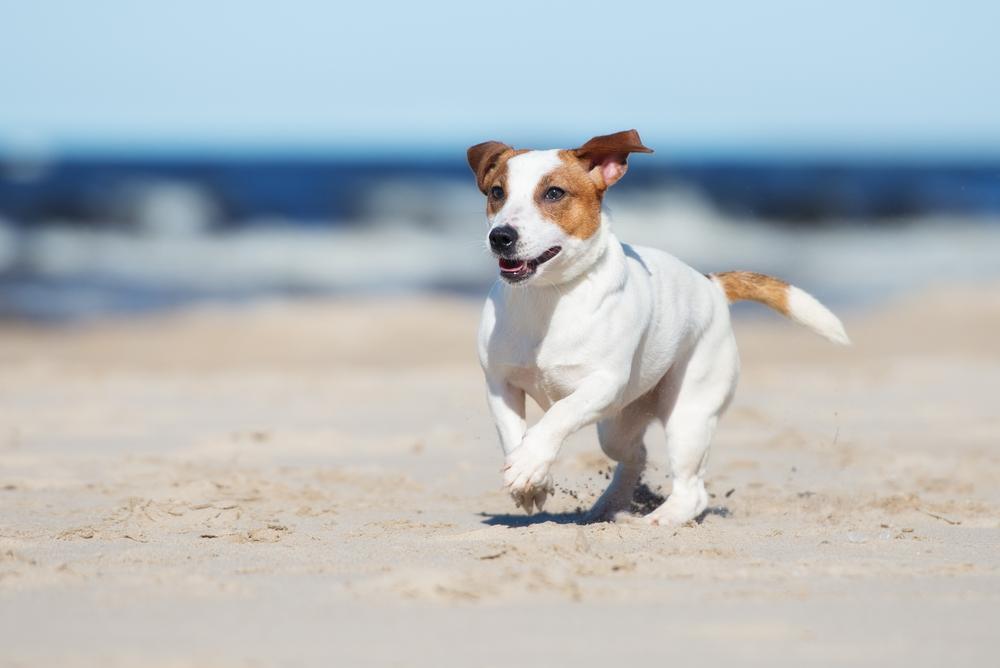 Herfstvakantie hond Ouddorp